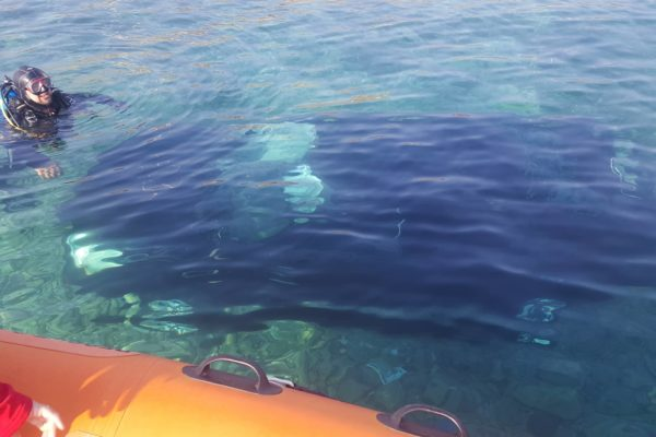 Hellenic rescue team respond to a car that fell in the sea